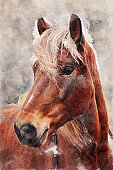 Watercolor painting of horse portrait