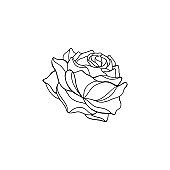 Sketch of rose on a white background. Vector hand draw illustration isolated on white background.