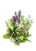 Herbs white background Basil sage thyme rosemary mint lavender