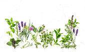Fresh herbs Basil sage thyme rosemary mint dill savory lavender