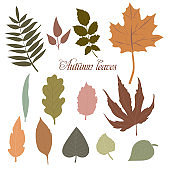 A set of colourful autumn elements for your design, made of leaves from various trees. Isolated on a white background. Simple cartoon flat style