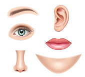 Face realistic. Human parts nose head eyes mouth vector pictures collection set