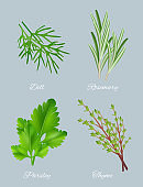 Green herbs. Realistic species for culinary medical plants food aromatic ingredients healthy leaves vector template