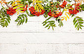 Autumn concept with leaves and  rowan berries on a white rustic background