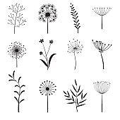 Set of  flower elements for design.