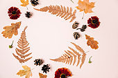 Flat lay composition with dry maple leaves, fern, red flowers and pine cones on pink studio background for advertisement. Creative autumn, thanksgiving, fall, halloween concept. Top view, copy space