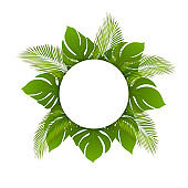 Beautiful vector trendy summer tropical leaves, round frame. Banner with green tropical forest palm leaves background template. Can be used for cosmetics and spa