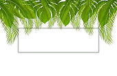 Beautiful vector floral tropical palm leaves frame, place for text. Tropical banner with exotic leaves and plants on white background.