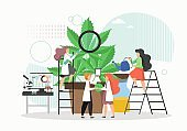 Medical cannabis or marijuana research. People in lab coats growing giant hemp plant in pot, flat vector illustration.
