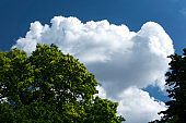 sky and cloud with tree background