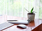 Computer documents and cup of coffee with sansevieria in white pot on wooden table.