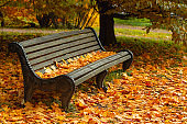 Park bench strewn with autumn yellow maple leaves