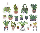 Home plants in flower pots vector illustration isolated set coll