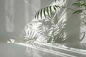 Interior surface with twigs of evergreen tropical palm with shadows on a wall.