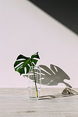 Small green leaf in a vase and shadow