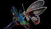 exotic multicolored butterfly looking for pollen on a flower, macro photo digital neon light effect, black background