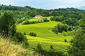 Susegana -View of the prosecco vineyards in the famous hills around Conegliano Veneto