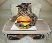 Cat eating fresh fish burger in bed