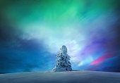 Snowcapped Tree Under The Arctic Sky