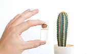 A hand holds a small bottle containing cactus oil. The concept of the use of cactus oil in medicine and cosmetology, background, aromatherapy
