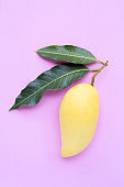 Yellow mango on pink background, Tropical fruit  juicy and sweet.