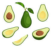 Fresh avocado illustration set. Stock vector. Whole avocado with leaves, half and slice avocado.