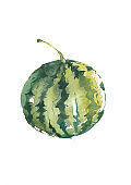 Hand drawn watercolor painting on white background. illustration of fruit watermelon