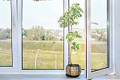 open window with plastic white frame and houseplant tree in vase on window sill