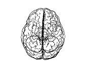 Top view brain doodle illustration isolated on white BG