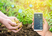 Smartphone in the hands of a farmer. Smart agriculture. Automation and crop quality improvement. High technology, innovation. Scientific research. Worker work on the field, harvesting potatoes.