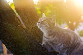 Beautiful playful gray kitten on a tree on a bright sunny day. Pet. Animal. Selective focus