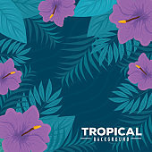 tropical background with flowers purple color and tropical plants, decoration with flowers and tropical leaves