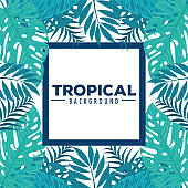 tropical background and frame of branches with jungle plants, decoration with tropical leaves