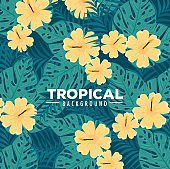 tropical background, flowers yellow color and tropical plants, decoration with flowers and tropical leaves