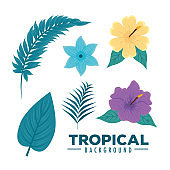 tropical background, branches, leaves, flower and hibiscus