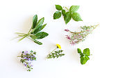 Various kinds of fresh garden herbs, Fumaria officinalis, dandelion, Glechoma, Lemon balm, raspberry and blackberry leaf isolated on white background.