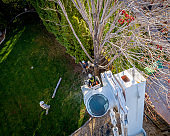 Aerial view of tree cutters removing limbs from a maple tree