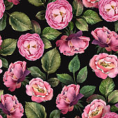 Watercolor seamless pattern. Pink rose with leaves on dark background.