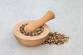 Grindelia Herb Herbal Medicine