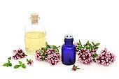 Oregano Herb Essential Oil Herbal Medicine
