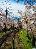 Train and cherry flower