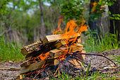 closeup camp fire in a forest glade
