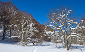 forest in a snow at the bright day, winter outdoor scene