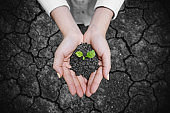 Woman's hand holding growing tree, with cracked arid soil background. Climate change, new life, hope and seedling concept