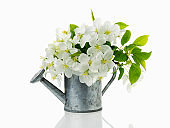 Bouquet of blooming branches of Apple trees in a vase in shape of garden watering can