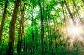a spring forest trees. nature green wood sunlight backgrounds.