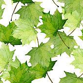 Maple leaves pattern.