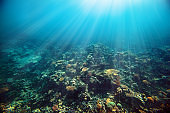 a underwater coral reef on the red sea