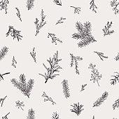 Botanical seamless pattern with evergreens.