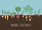 Vegetable garden banner. Organic and healthy food.